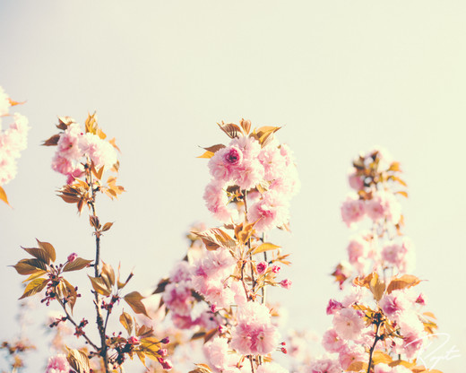 Spring Flowers wm-13.jpg