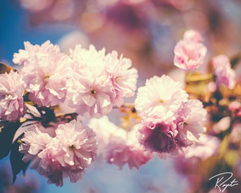 Spring Flowers wm-16.jpg
