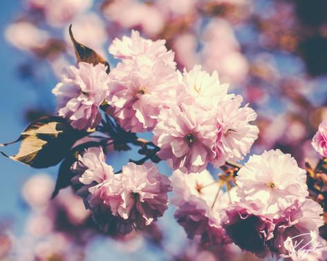 Spring Flowers wm-4.jpg