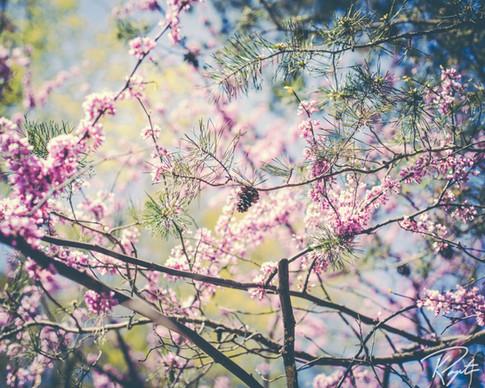Spring Flowers wm-23.jpg