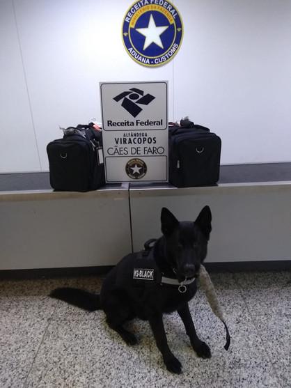 Cão farejador auxiliar na apreensão de 49 kg de cocaína no Aeroporto de Viracopos