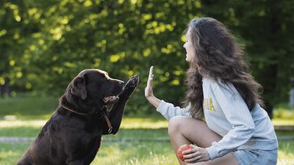 Com nova Lei, Paulínia passará a ter Conselho do Bem-Estar Animal