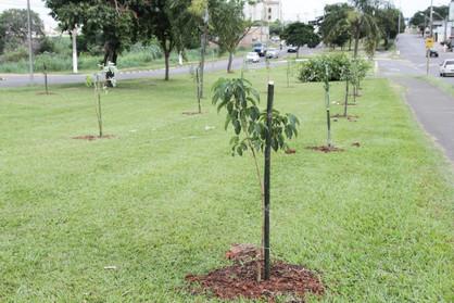 Administração Municipal realiza o plantio de 57 mudas em comemoração ao aniversário da cidade