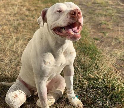 Lei que aumenta a punição para maus-tratos a cães e gatos é sancionada
