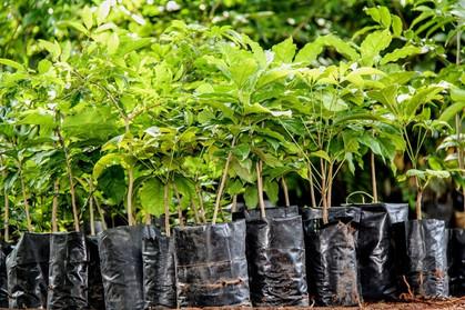 Jardim Botânico doa 100 mudas para Prefeitura de Cosmópolis