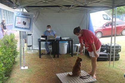 Prefeitura já castrou mais de 2 mil animais gratuitamente