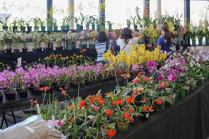 Paulínia Shopping recebe Festival de Orquídeas e Suculentas de Paulínia neste fim de semana