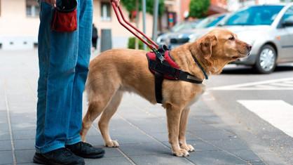 Cão de Assistência: entenda mais sobre os animais que auxiliam as pessoas