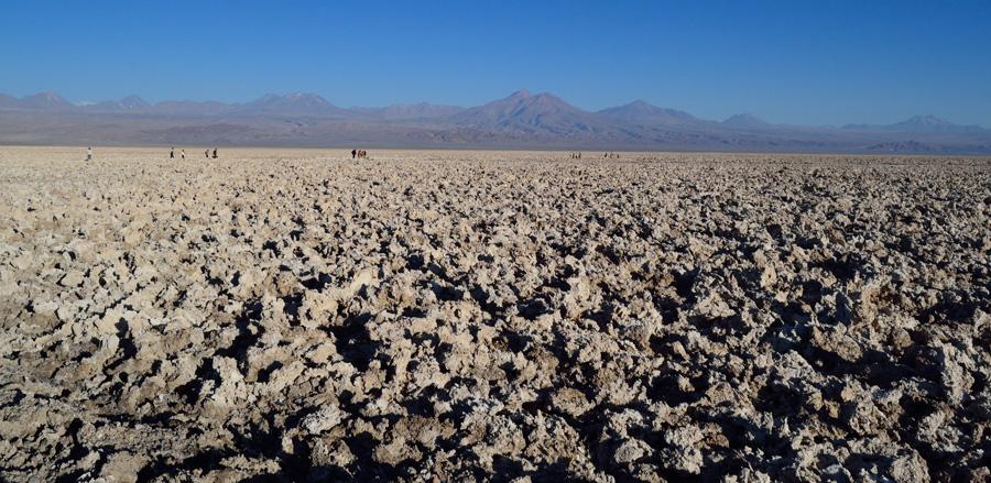 Atacama salt flat, Chaxa