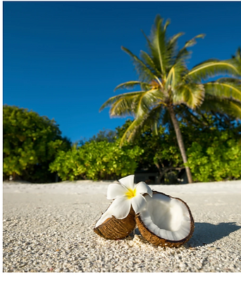 Island Coconut Fragrance.PNG