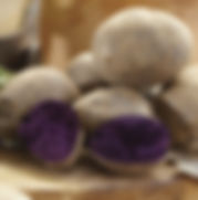 Potato_Solanum_tuberosum_Purple_Majesty_