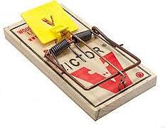 Rat trap plastic trigger.jpg