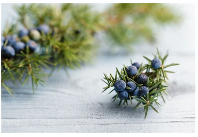 Juniper Essential Oil.PNG