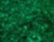 Emerald Green Glitter.PNG