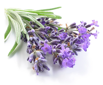 French Lavender.PNG