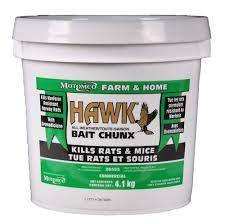 Hawk rat .jpg