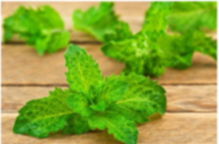 Peppermint essential oil.PNG