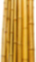 Thick bamboo.jpg