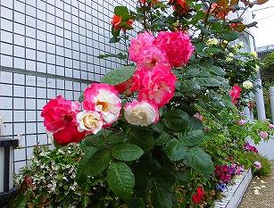 医院前のお花