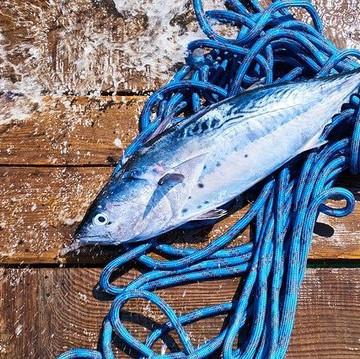 frischfisch.jpg