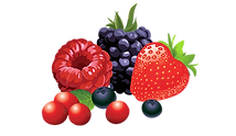 forest-fruits-png-vector-clipart-image-5