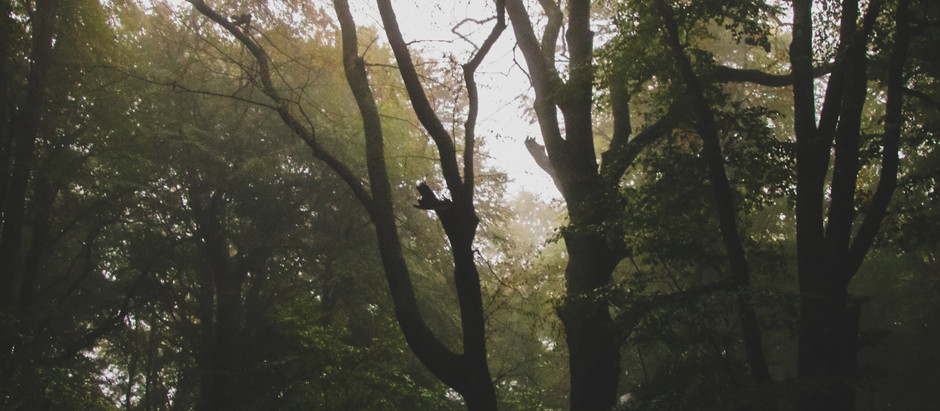 Mitt hjärta tillhör skogen