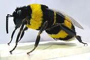 bourdon factice; abeille fatice; fake bumblebee