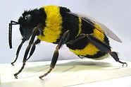 sculpture Bourdon geant, abeille geante, guepe géante, fake bumblebee sculpure, giant wasp sculpture, prop maker, modelmaker paris, sculpture sur commande