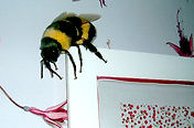 sculpture Bourdon geant; abeille geante; guepe géante; fake bumblebee sculpure; giant wasp sculpture; paris