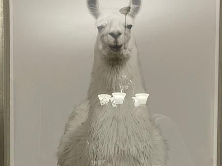 Why the Llama is my spirit animal this year