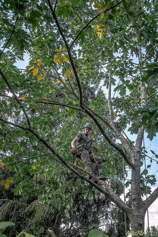 jojo-arbre.png