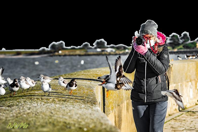 photographe photographiant des oiseaux