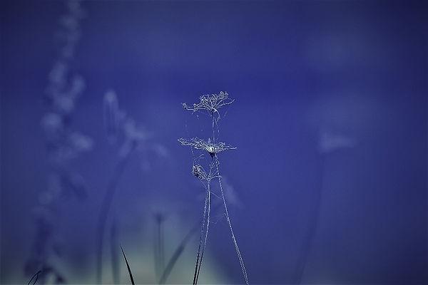 Restes de fleurs
