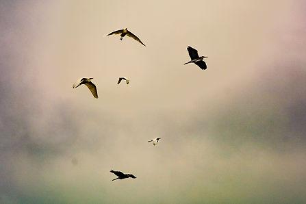 les herons_edited.jpg