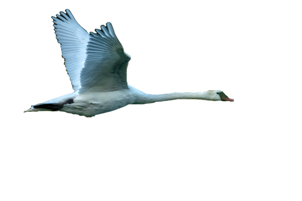 Les grands oiseaux