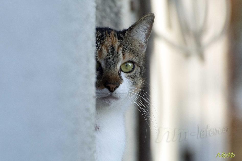 maman chat cachée pour observer les chatons