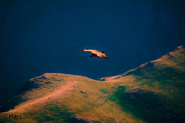 vautour (5)_edited.jpg