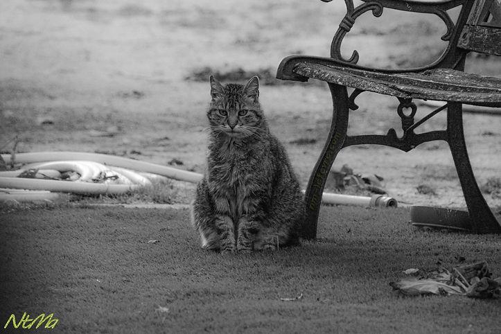 Chat à côté d'un banc