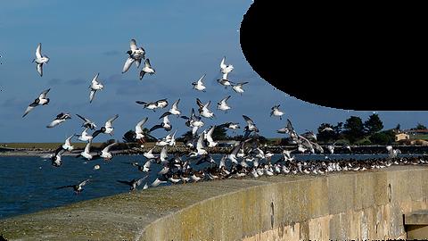 envole d'oiseaux