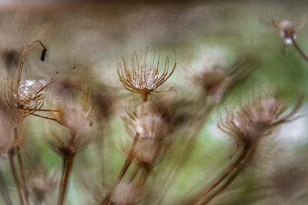 Glace au milieu d'un reste de fleur
