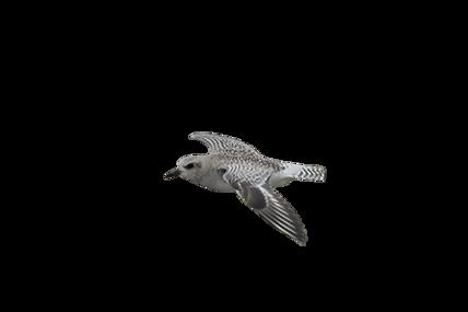 petit oiseau.png