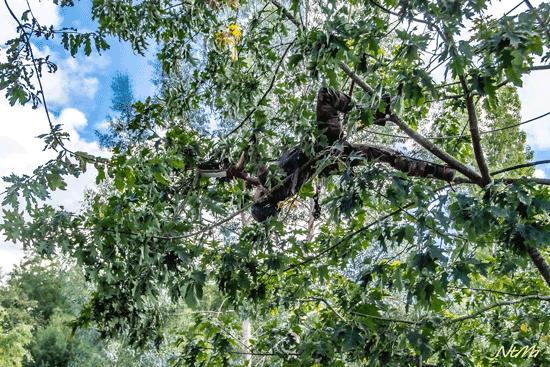 jojo-arbre-6.png