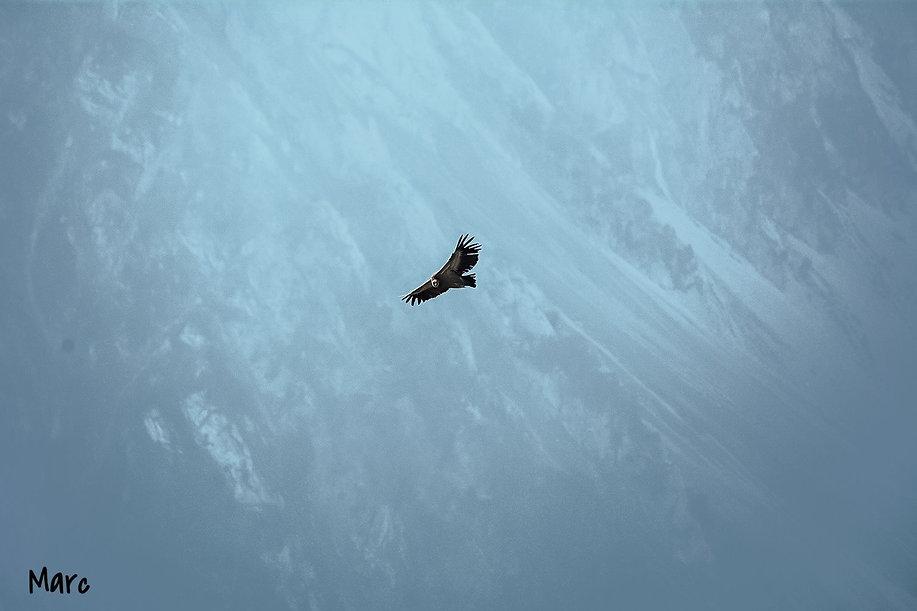 vautour-2_edited.jpg