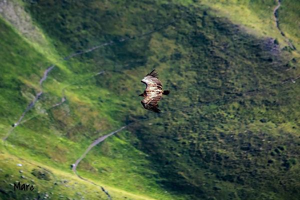 vautour (6)_edited.jpg
