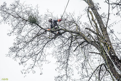 Johan dans les arbres.jpg