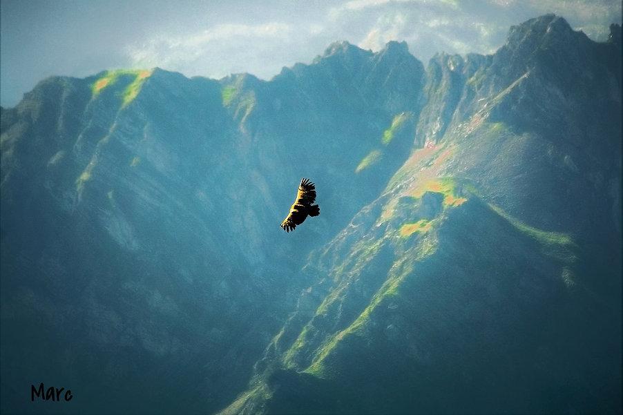 vautour (2)_edited.jpg