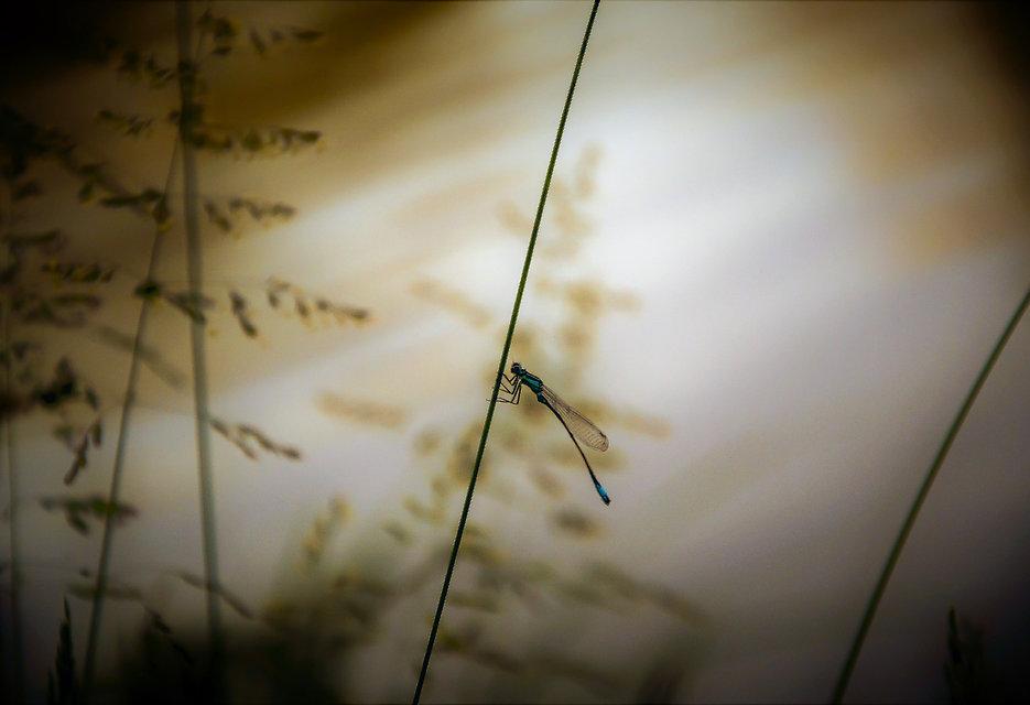 libelule nat.jpg