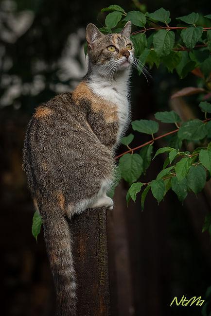 maman chat sur un poteau
