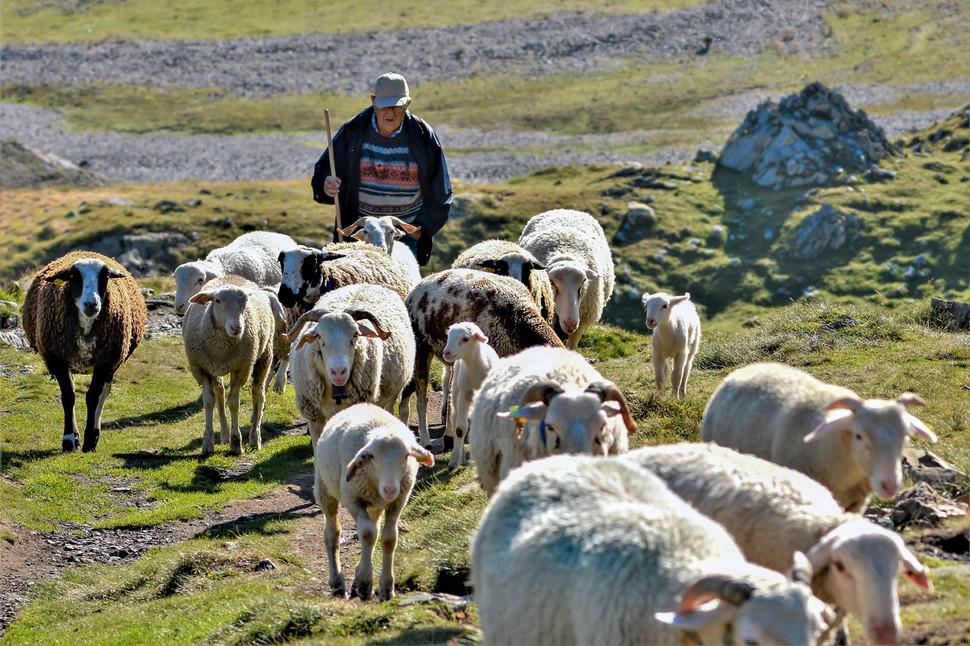 Berger et ses moutons au cirque de Troumouse