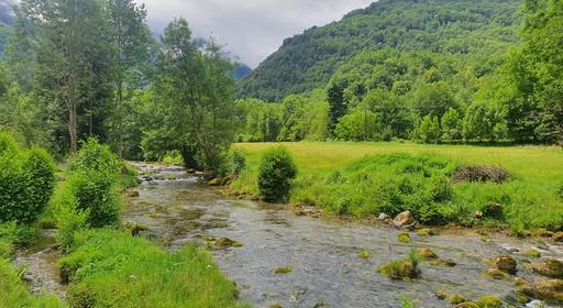 Les mousses de l'Ariège